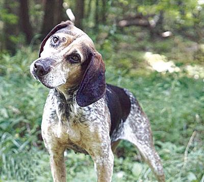 Celebrating hound dogs | News | thefranklinnewspost.com