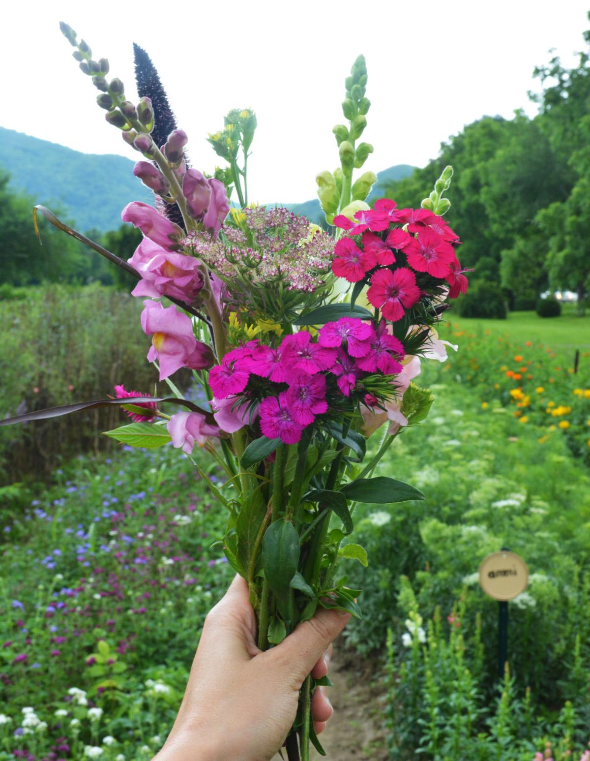 Pick Your Own Flowers at Flying Cloud Farm - Fay Grant.JPG