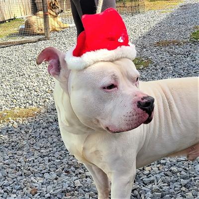 Sarge's dog Bear in Christmas hat