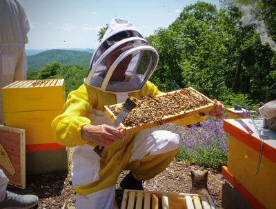 Inspecting the hives at Killer Bees Honey Bee Farm