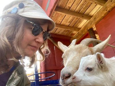 goat+baby.jpg
