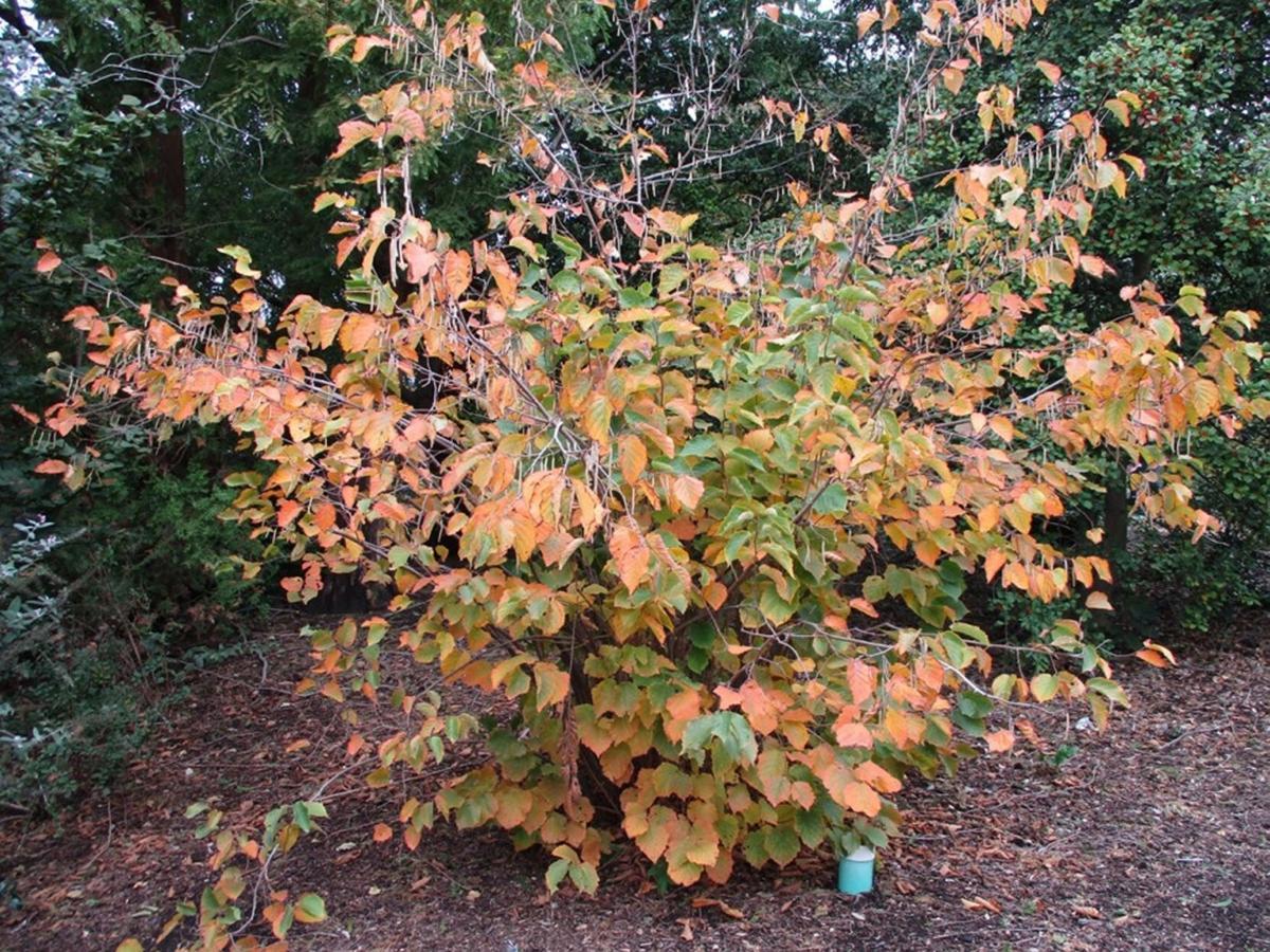 Tree, shrub sale aids conservation efforts