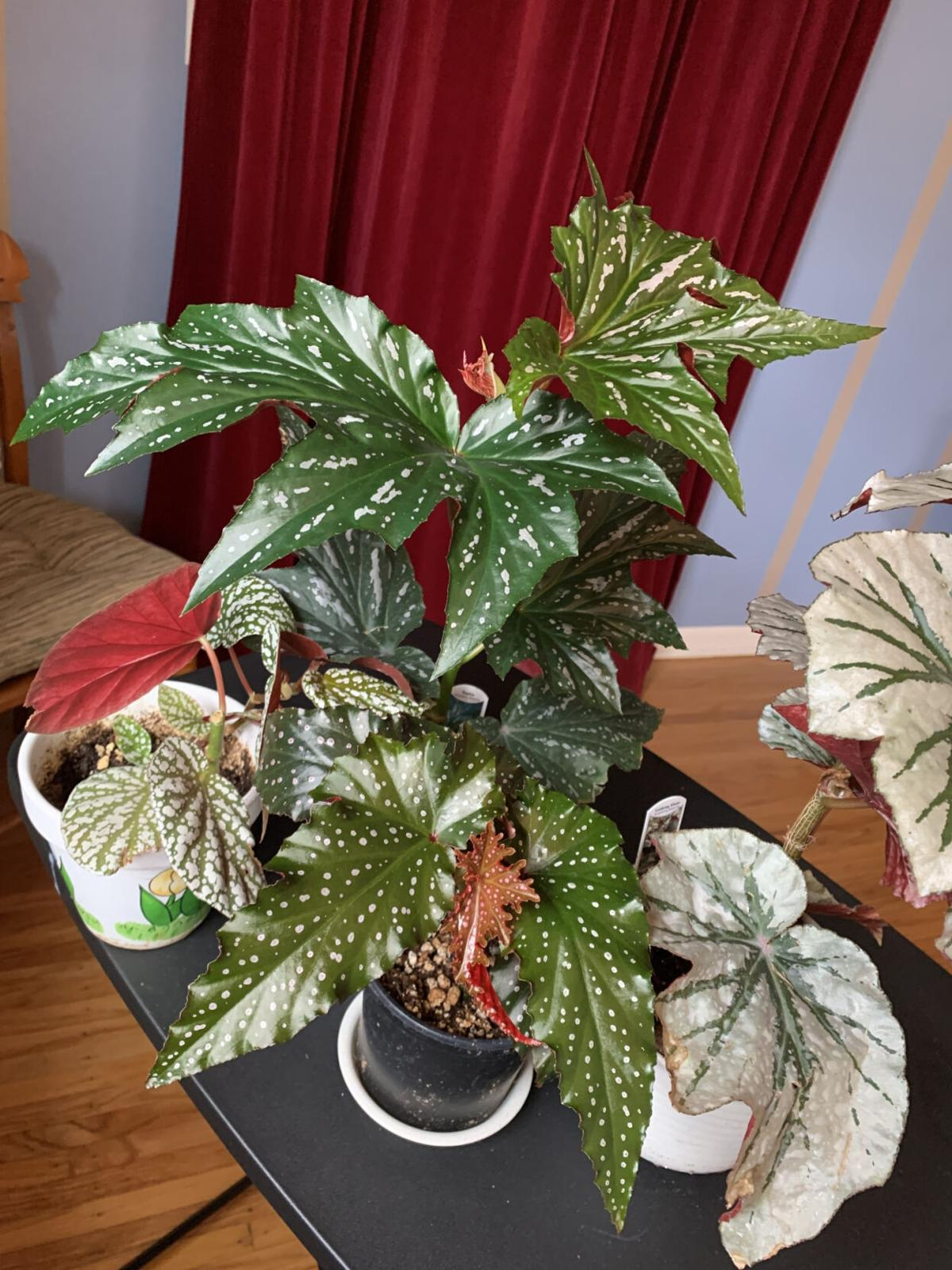 Now is good time to tend to houseplants