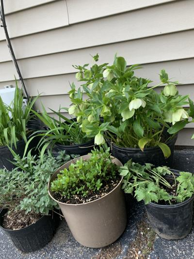 Take care of tender plants