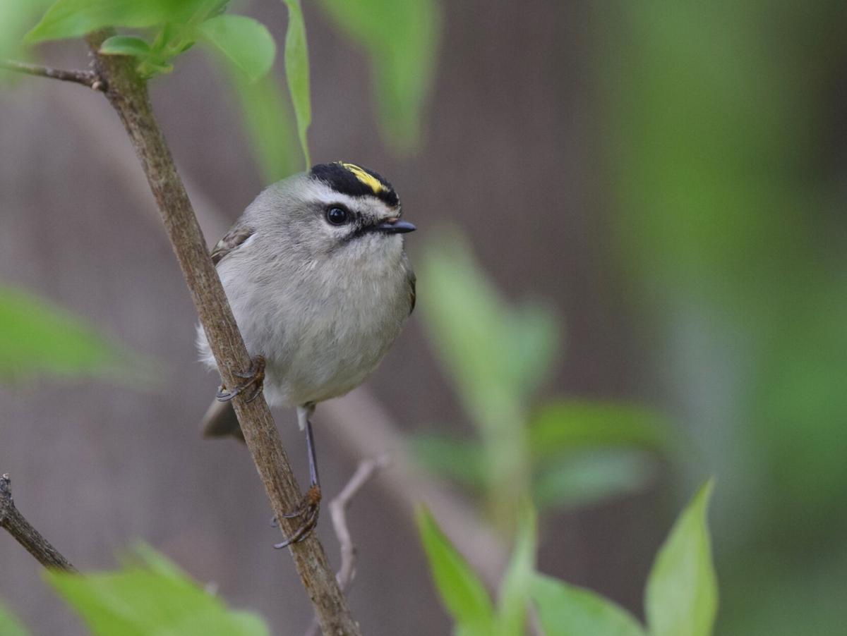 From eagles to kinglets, the bird world is diverse