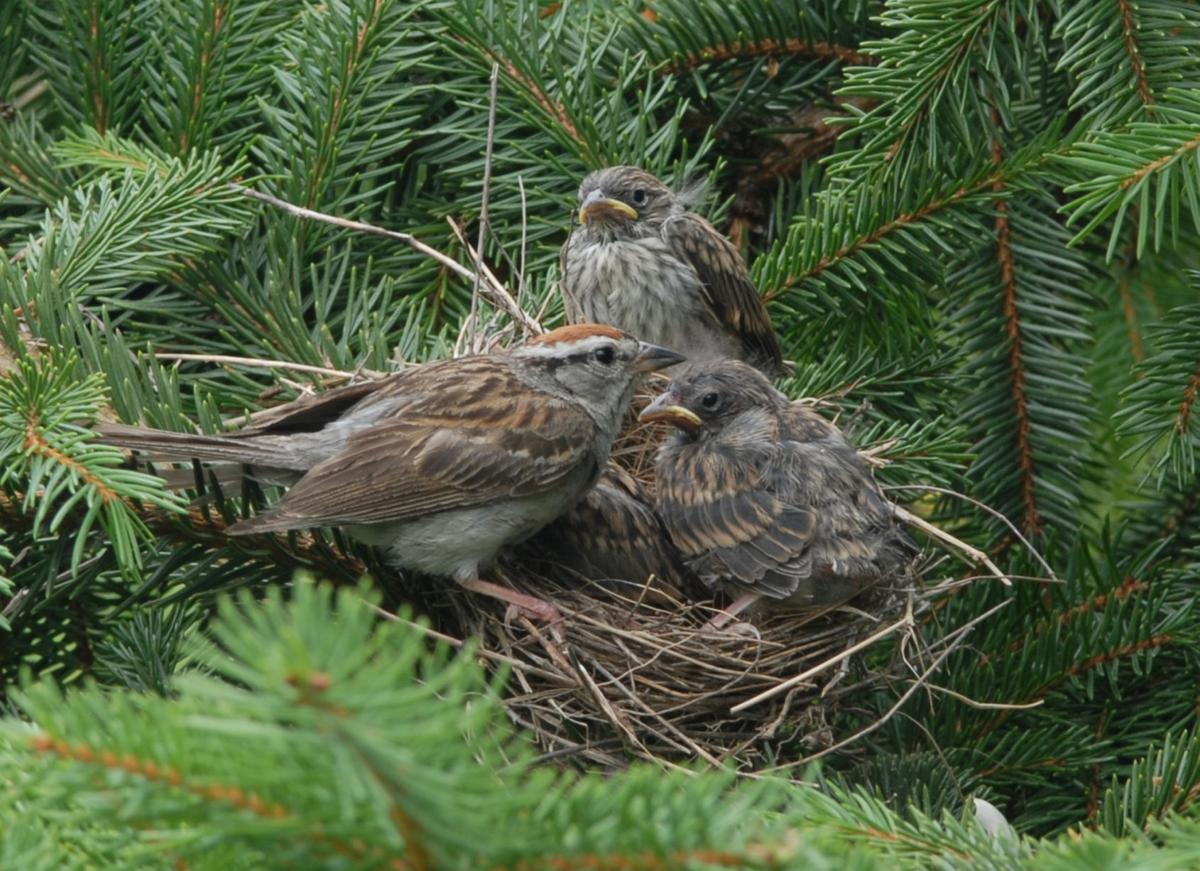 Nesting can bring new discoveries
