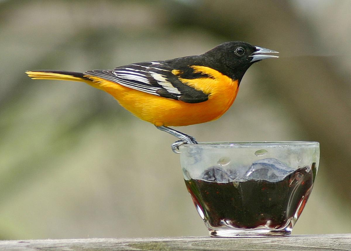 Cool weather slows migration