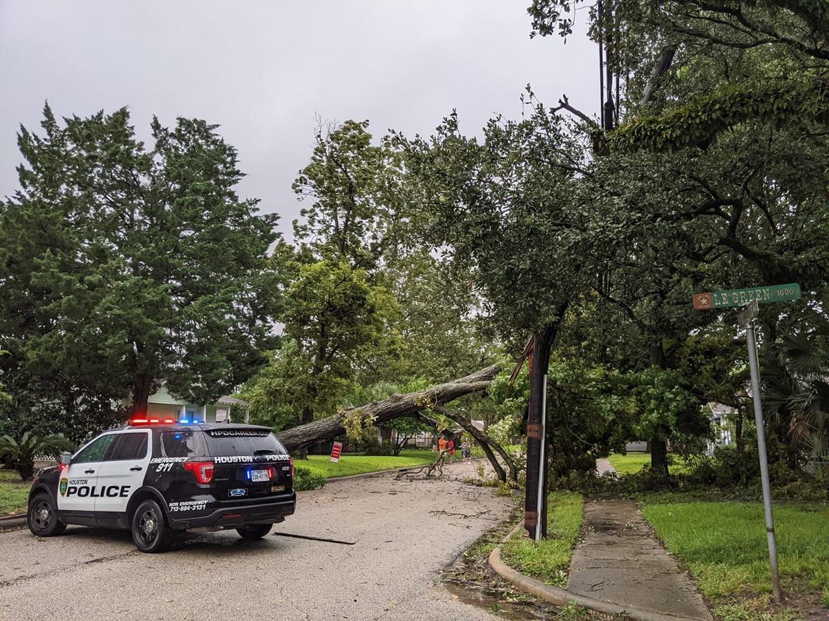 Fallen Tree in Heights-from FB--CP.jpg