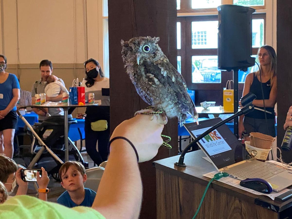 Screech Owl 2--SECOND CHOICE.jpg