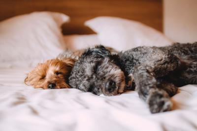 The Use of CBD in Pets