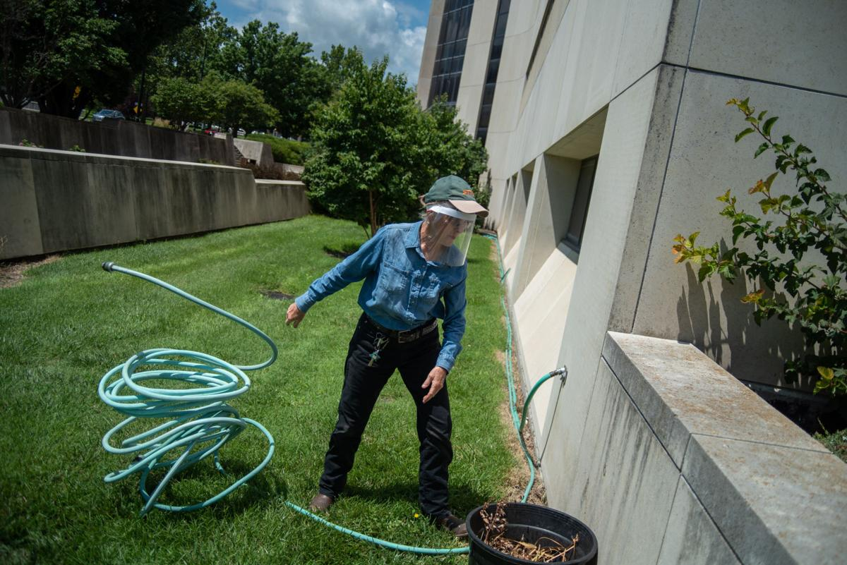 Cathie Lavis tosses a hose on the ground before watering the plants outside Throckmorton Plant Sciences Center on Wednesday.