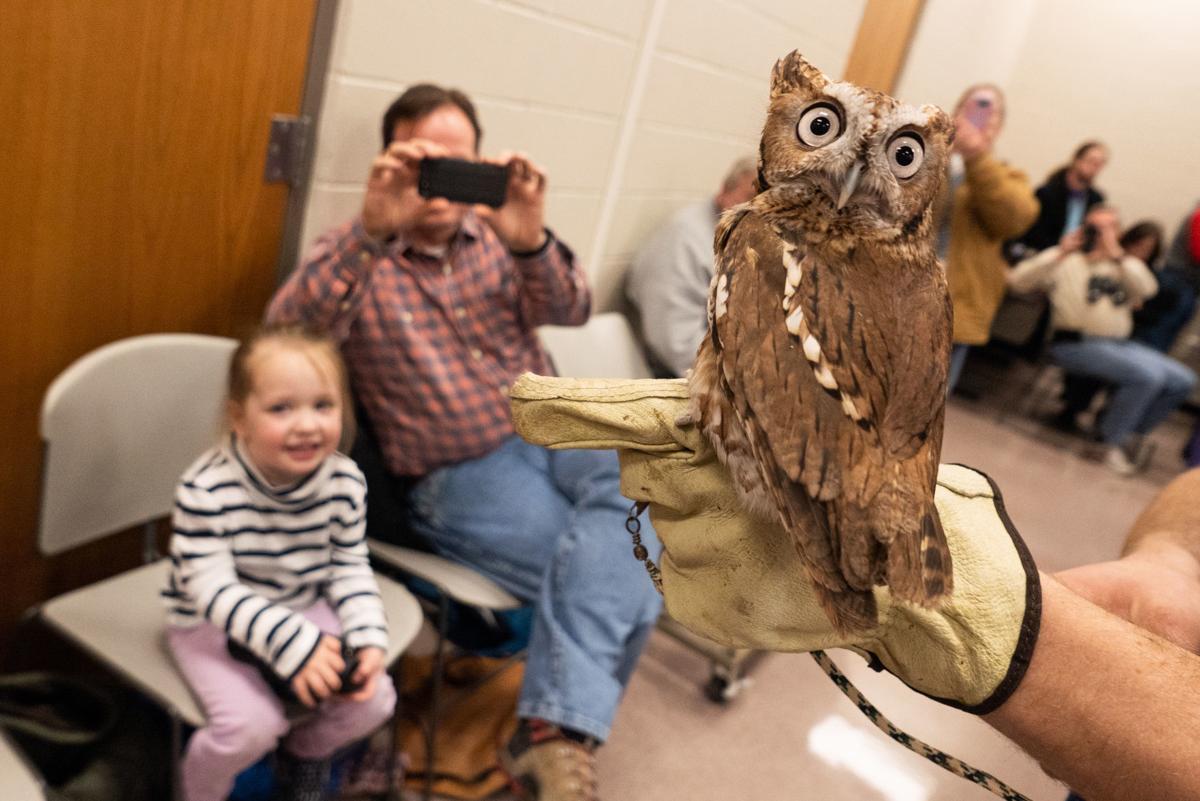Zach Swensen holds an Eastern Screech Owl in front of Christopher Jones and his daughter Eleanor Jones, 3.