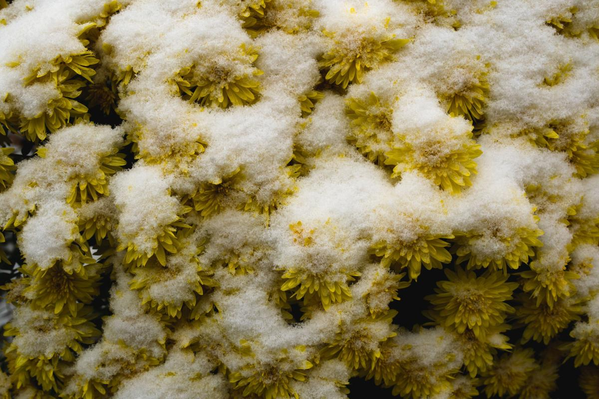 oct26_20_news_mer_snowdowntown-11.jpg