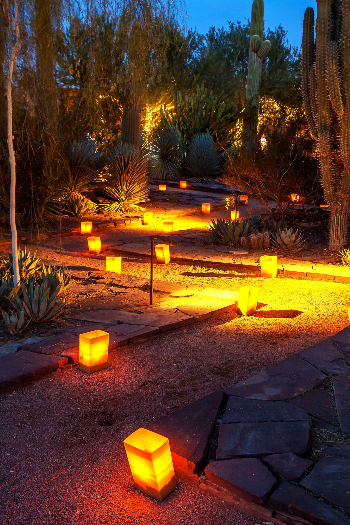 Phoenixu0027s Desert Botanical Garden Glows With 8,000 Luminaries During Its  Las Noches De Las Luminarias. Wildcat Fans Traveling For The Cactus Bowl  Can Catch ...