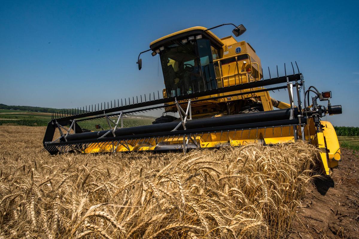 070821_merc_new_wheatharvest-9.jpg