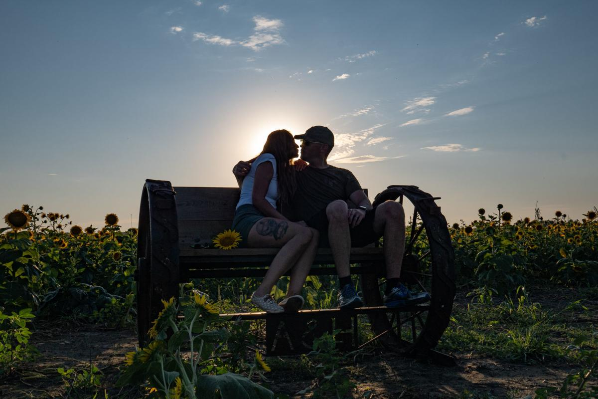 Sunset in the Sunflowers