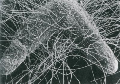 Myco fungus
