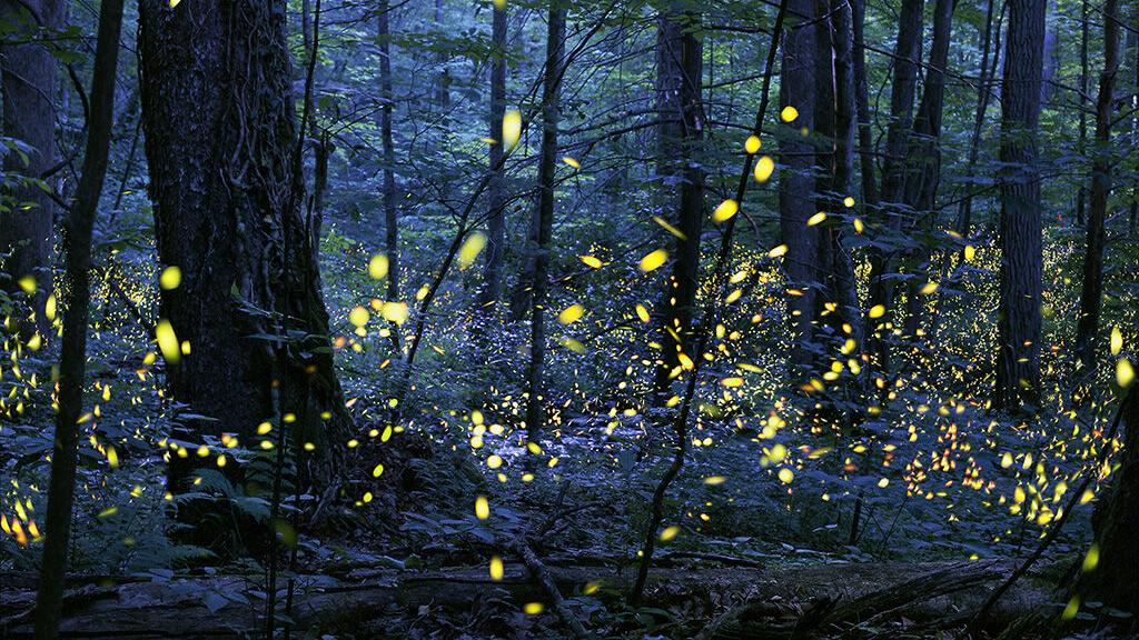 Hello there lightning bugs: summer magic is in the air