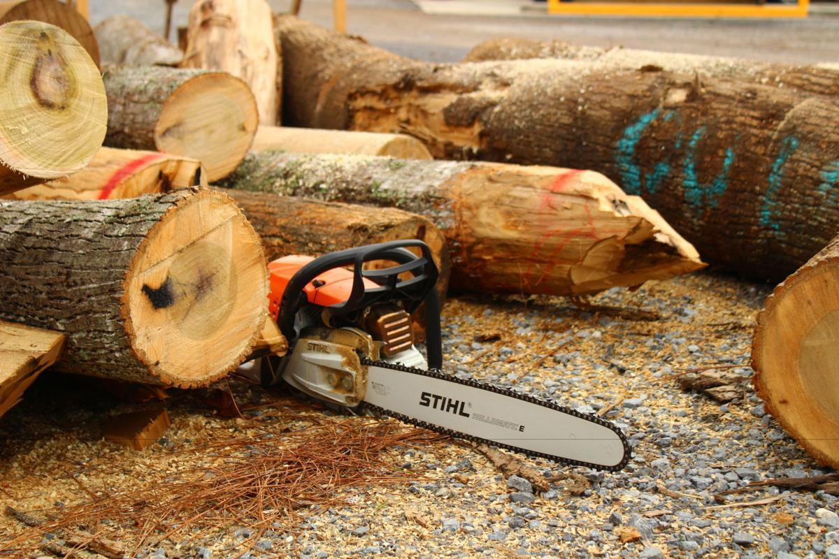 School of Lumberjacks | Sports | themountaineer com