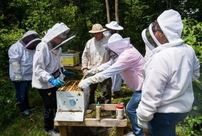 HIGHTS Bee Well program