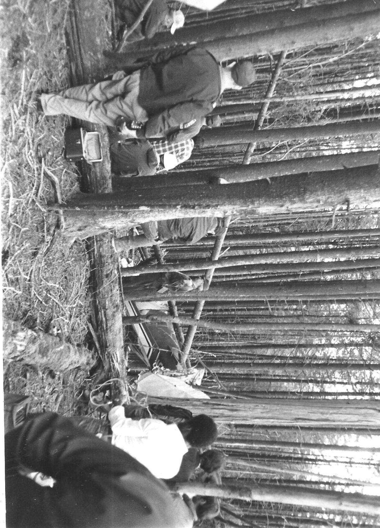 april 21 1980 crash in trees.jpg