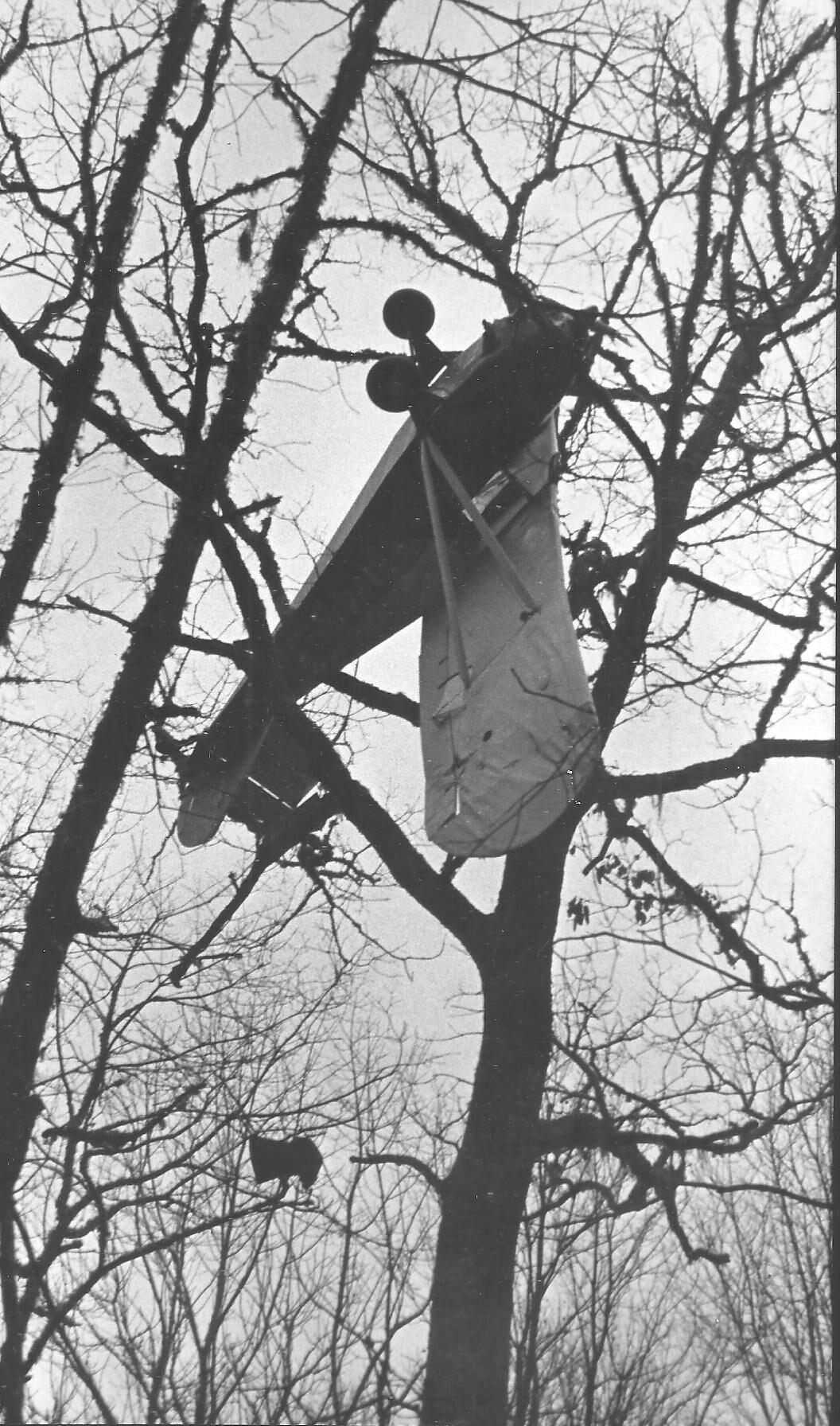 plane in tree.jpg