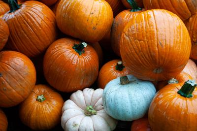 pumpkin patch closeup