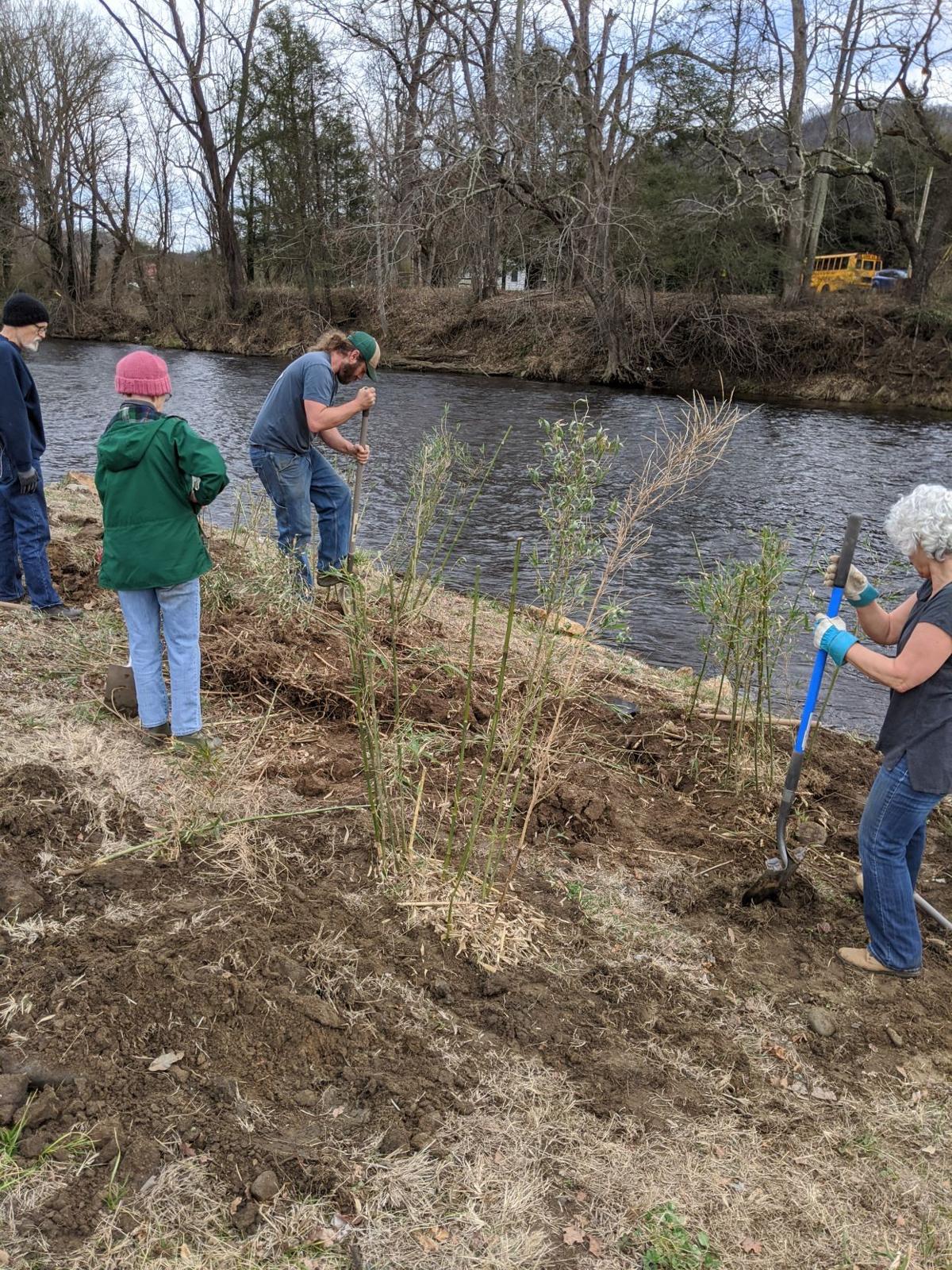 river cane planting 1.jpg
