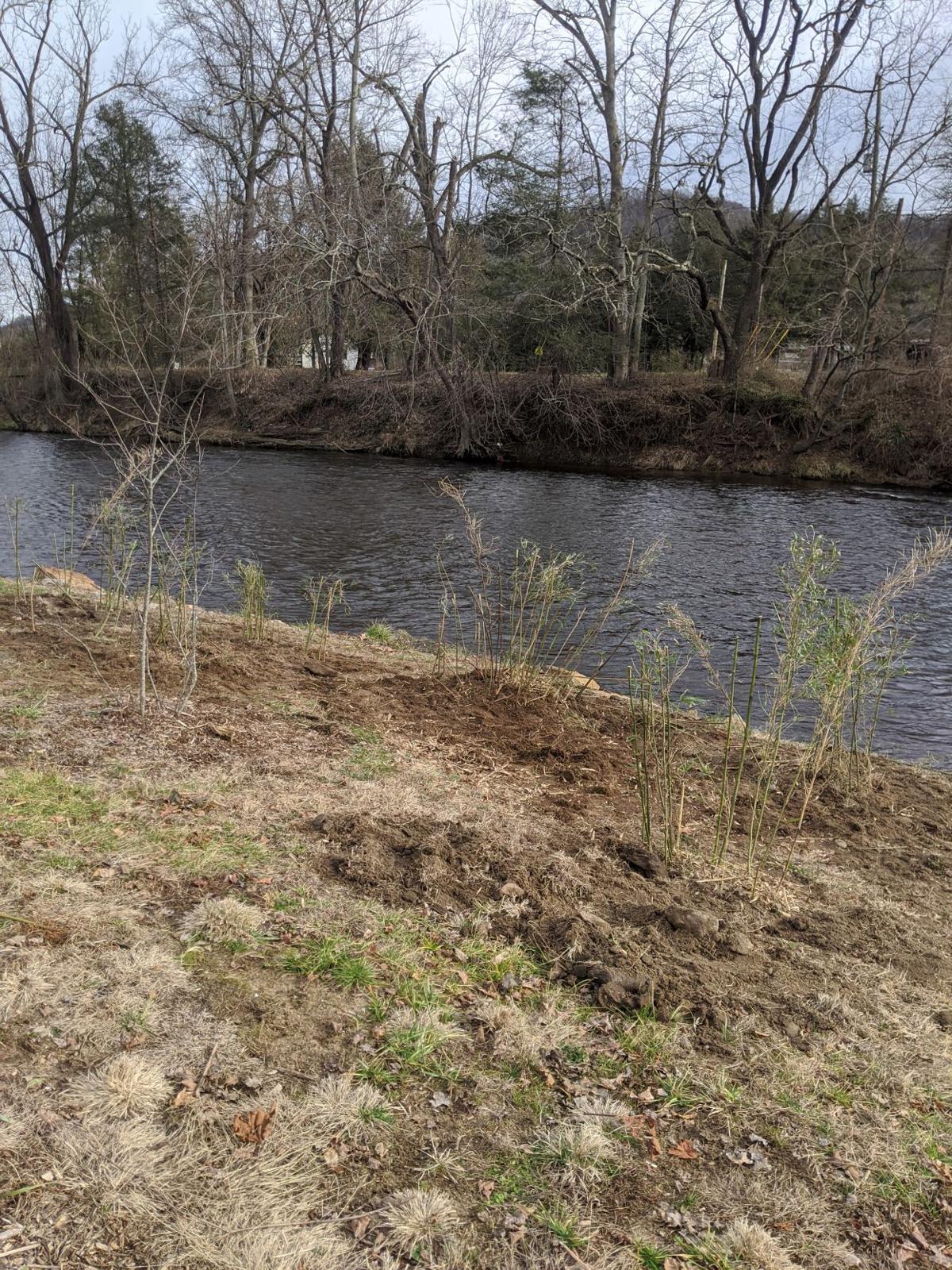 river cane planting 2.jpg
