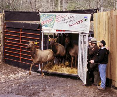 elk release  in 2001.jpg