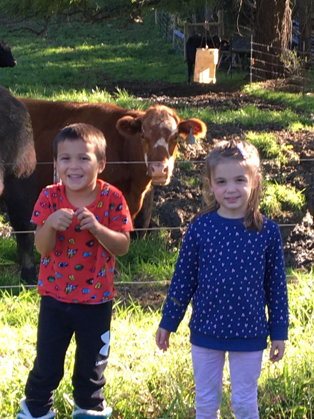 checking the cows.JPG