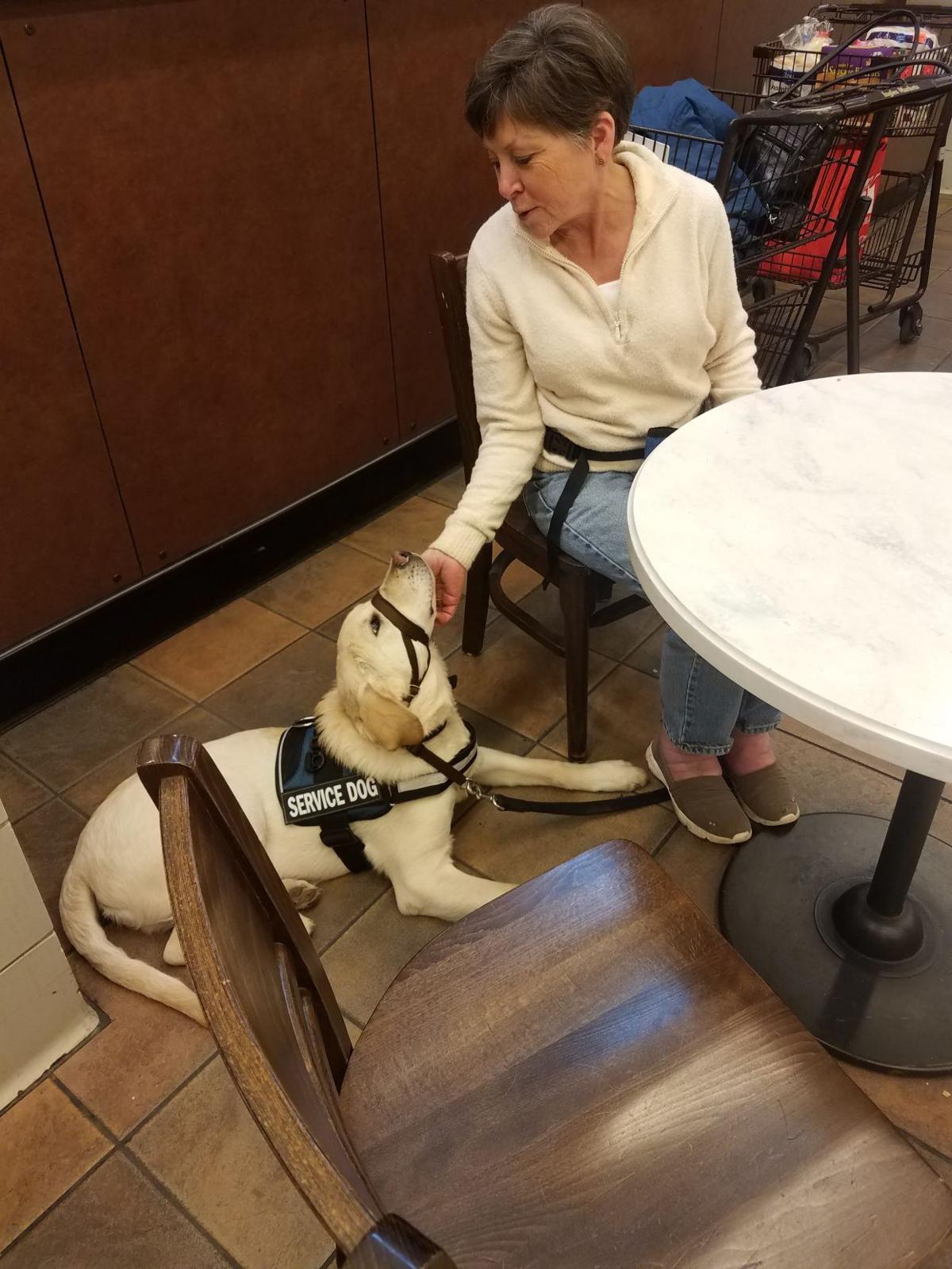 Kim Brophy Dog Training