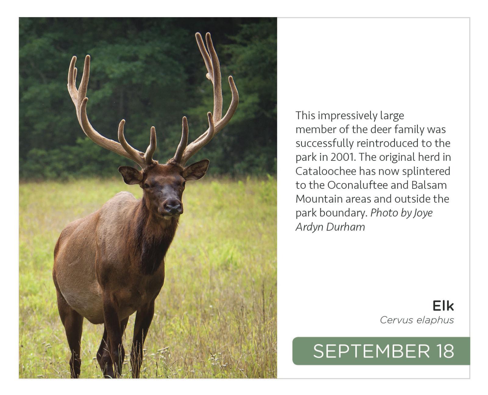 New Farm Factoids (Around Here Deer)