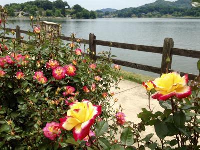 Lake Junaluska summer activities program