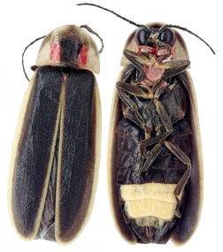 we lil bugs.jpg