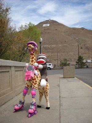 Giraffe on F St