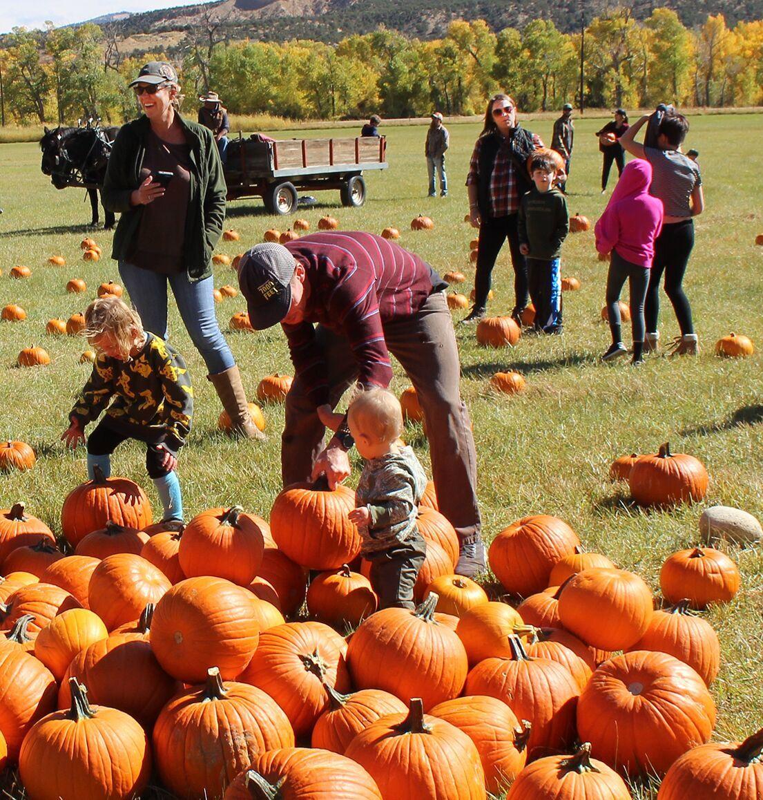 1012 pumpkins 1.tif