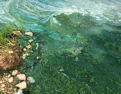 Algae bloom prompts CPW caution for Deweese Reservoir