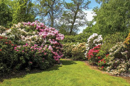 Abundant plant life