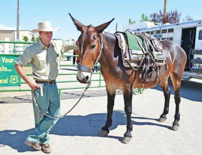 Usfs Shares Horse Mule Packing Tips News Themountainmail Com