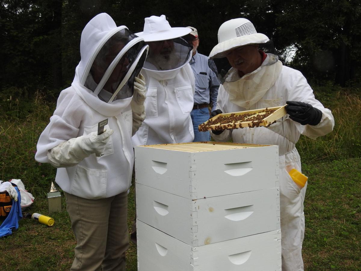 Club apiary helps new beekeepers learn