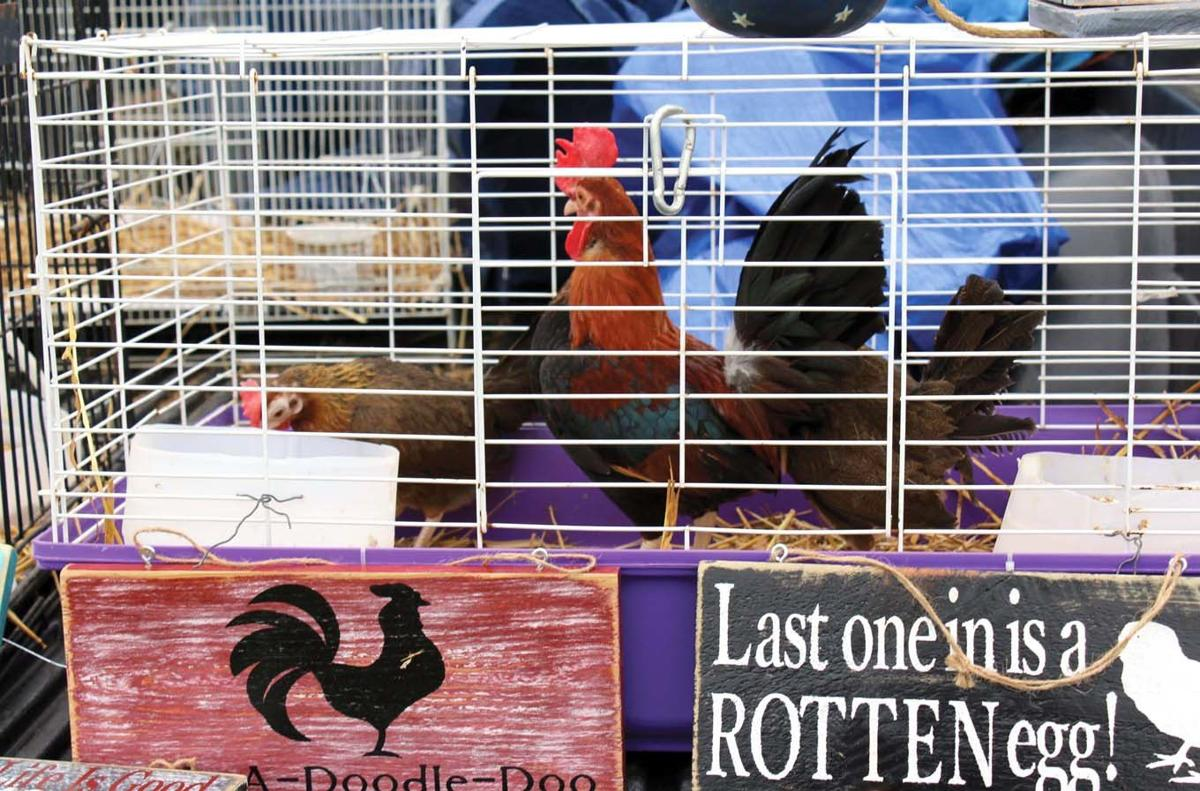 Swapping chickens and good company | Local News