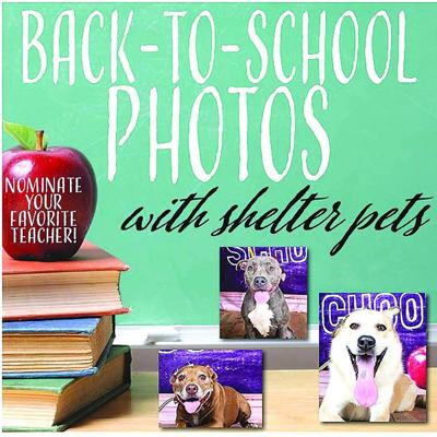 Teacher nominations sought for shelter animal photo series