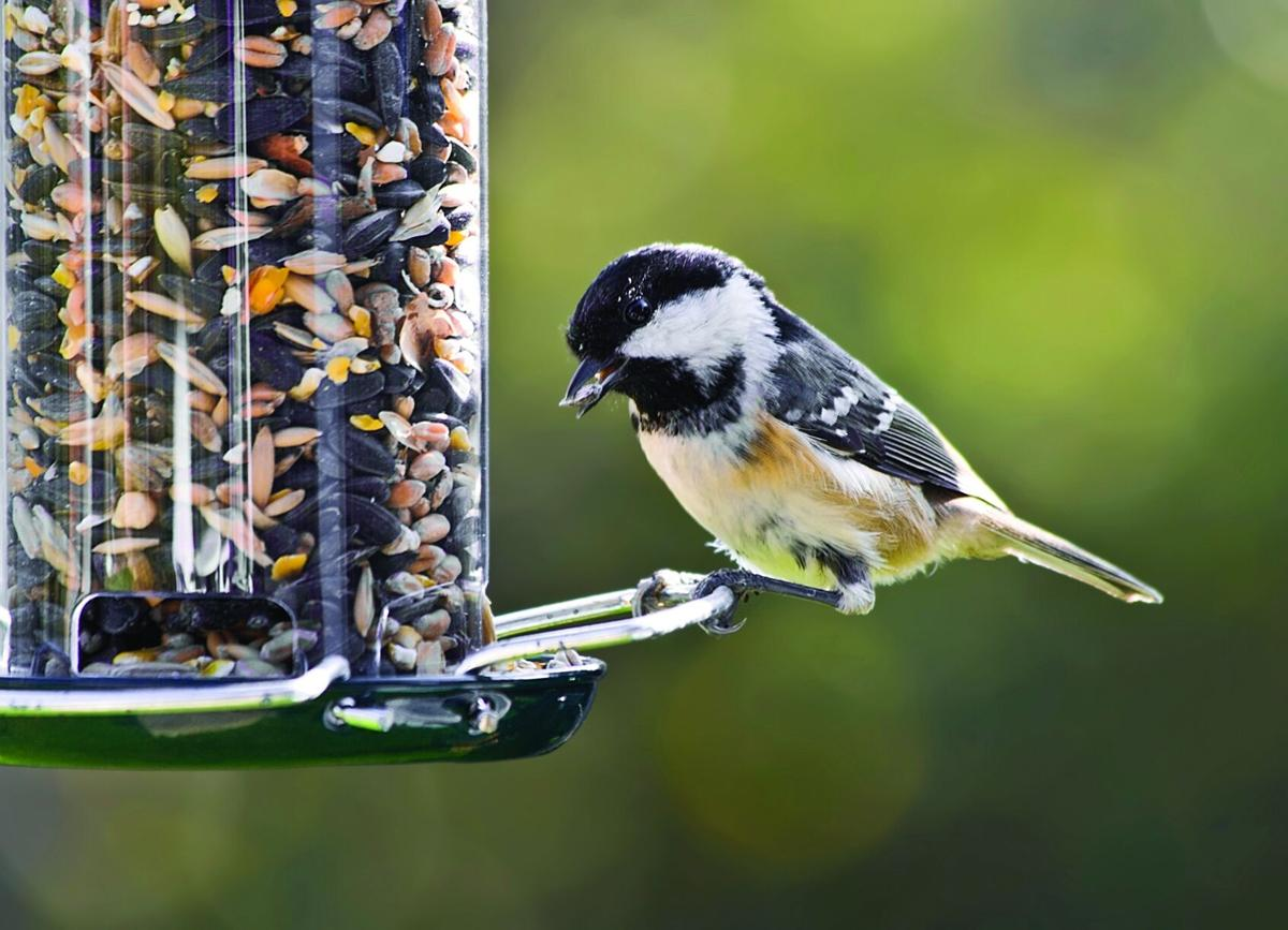 It's time to think about feeding the birds