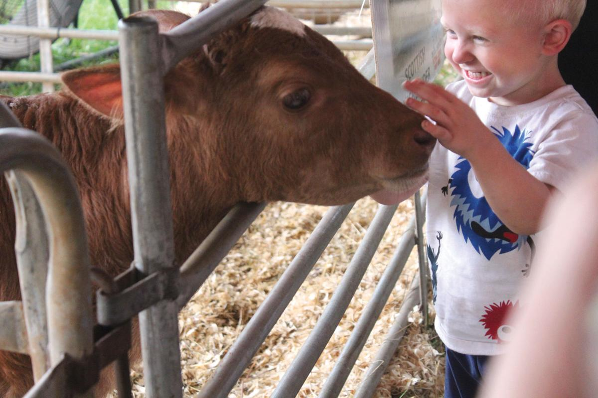 Petting zoo attracts fair guests all week