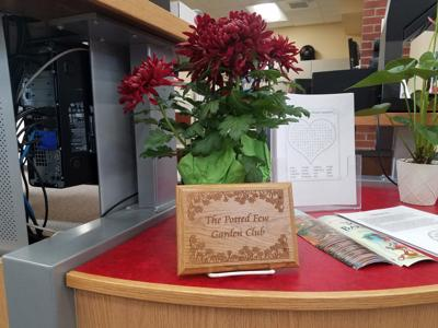 Potted Few member donates flower to Barr Library
