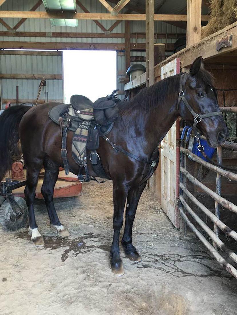 'Heartbroken' horse owners seek answers after shooting