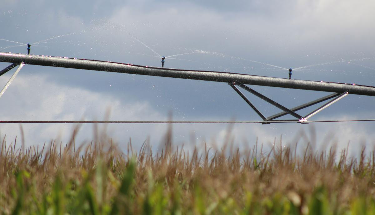 Heat, dry conditions pose problems for local farms