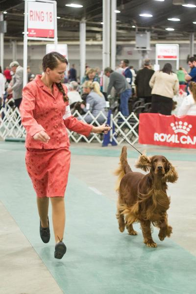 Area kennel club hosting one of nation's largest dog shows this week