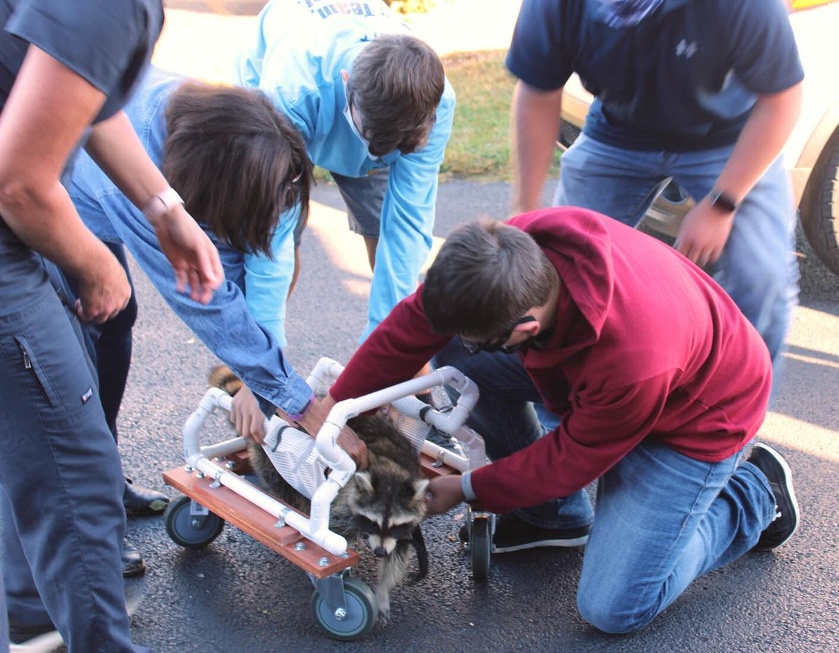 Central Hardin High School students build new set of wheels for raccoon